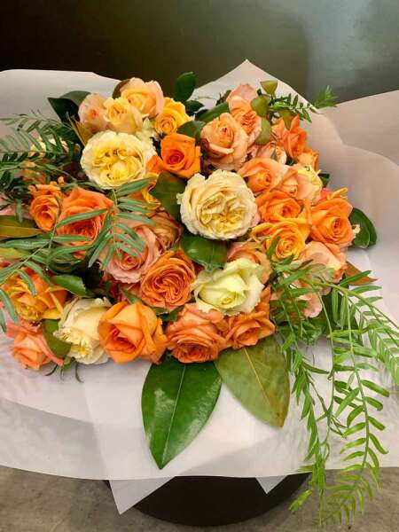 Autumn Beauty - Local Garden Roses